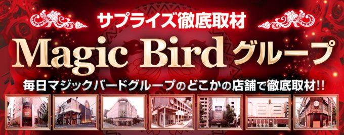 Magic Bird グループ